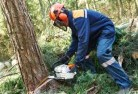 Ajana Tree cutting services 21